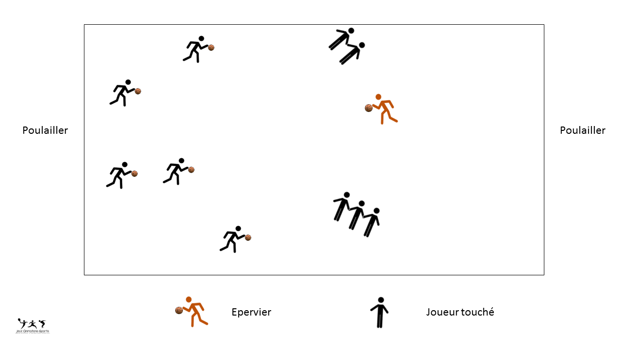 Epervier variante basket